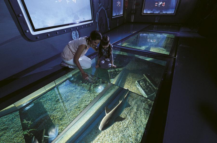 Siam Ocean World Day2 (30.11.57)2074 LO