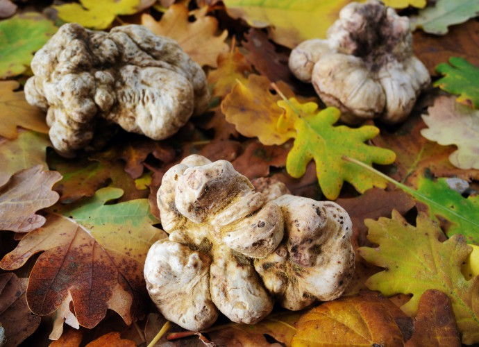 Elements_Italian White Truffle
